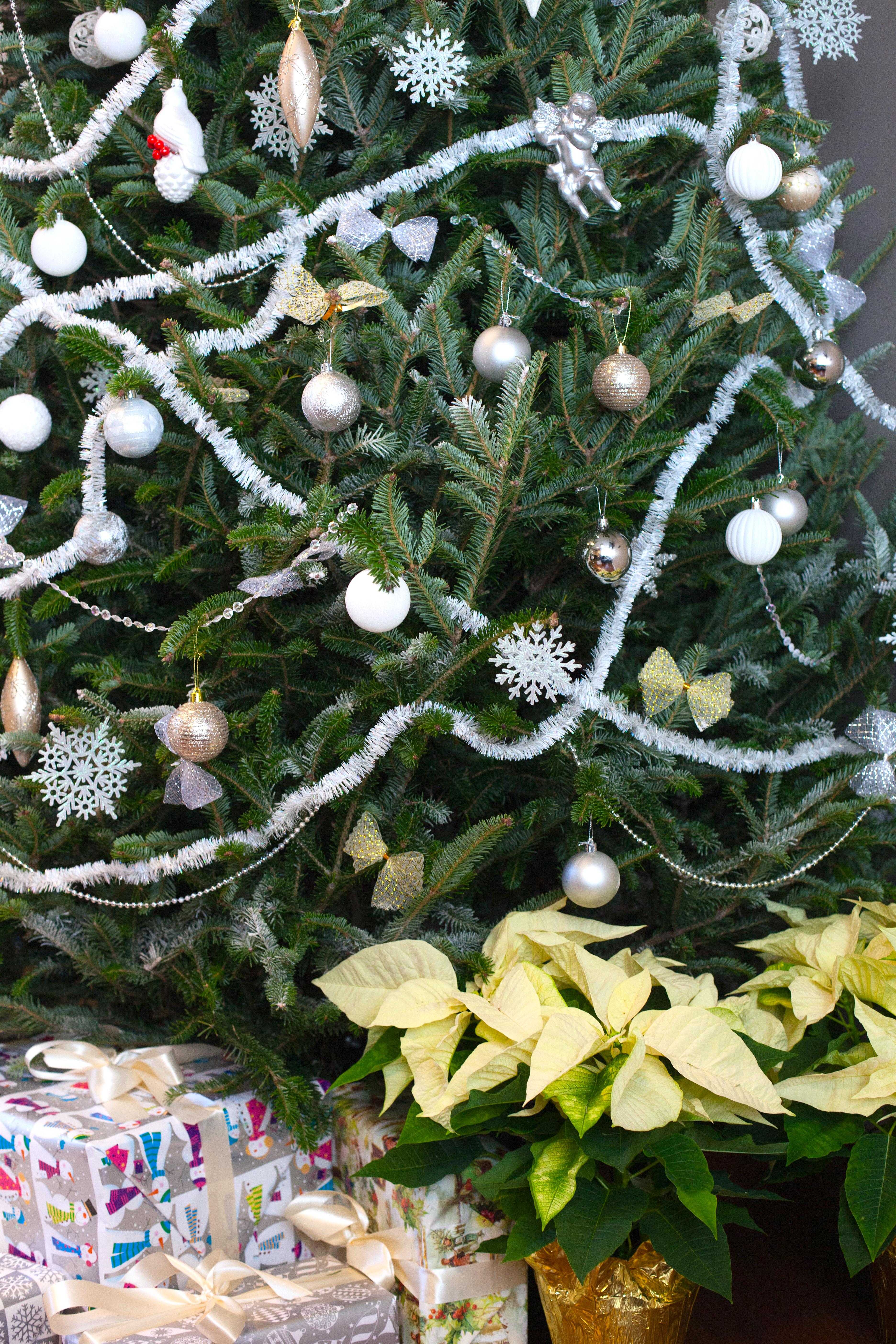 Christmas-sahola