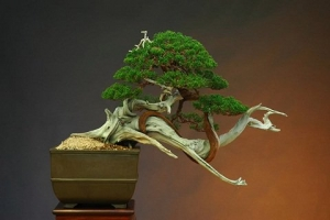 art-of-bonsai