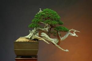art-of-bonsai