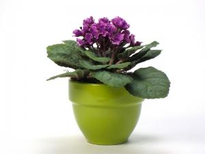 violet-photo